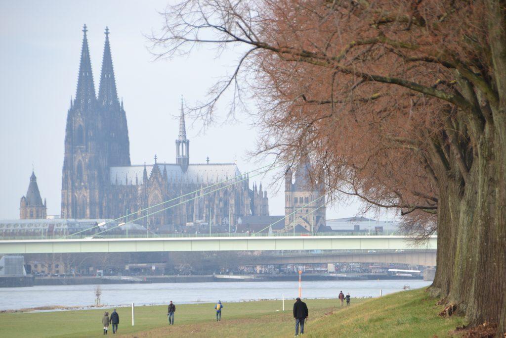 Der Kölner Dom ist vom Poller Rheinufer aus im Bildhintergrund hinter der lindgrünen Severinsbrücke zu sehen. Vorne rechts ist eine Reihe winterlich kahler, aber rötlich scheinender Linden, die eine Allee auf dem Rheindamm bilden.